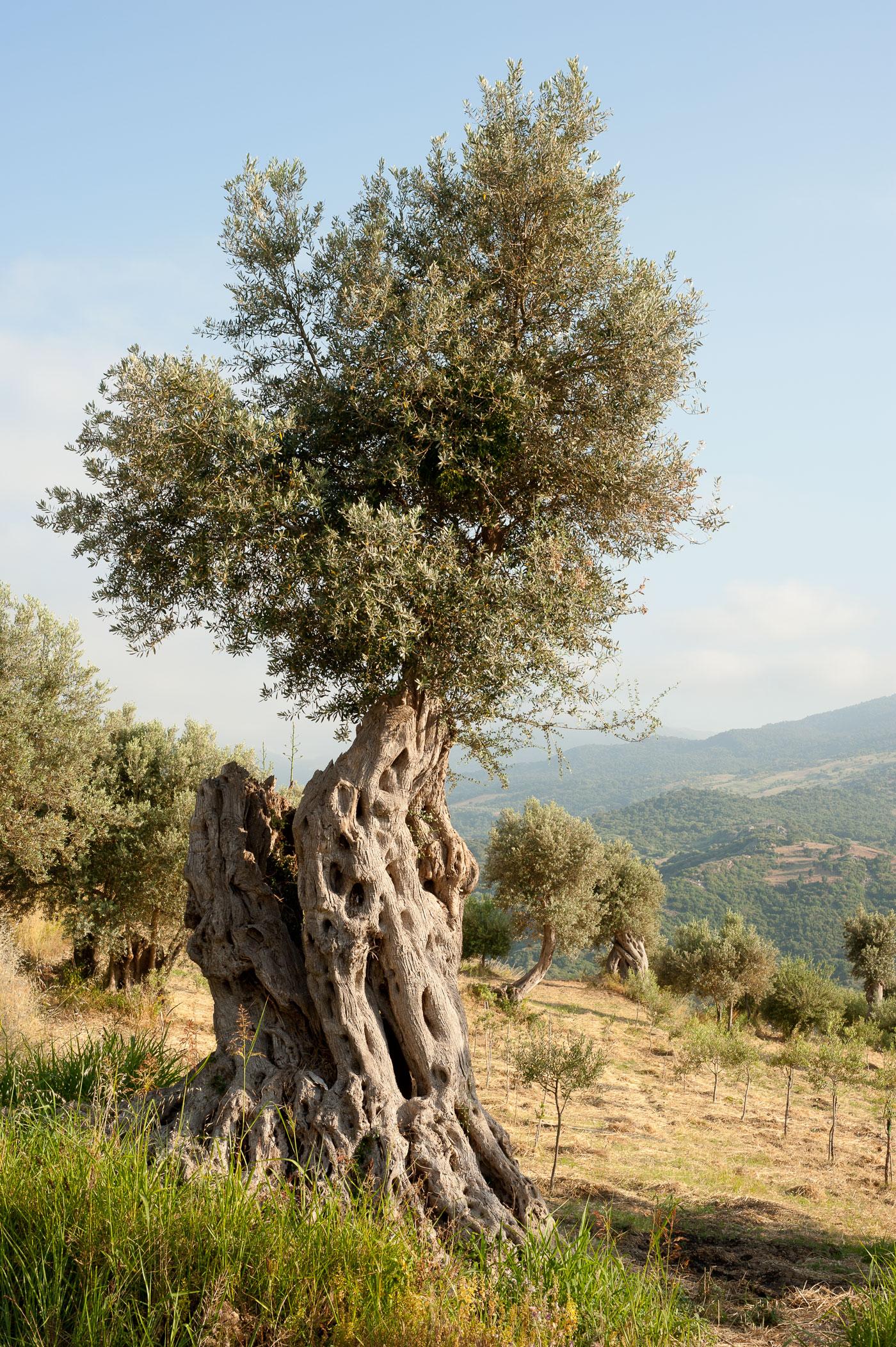 6_Sicily_Messina_North_Landscape_03